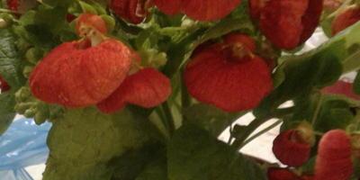 Пожалуйста, подскажите, что за цветок?