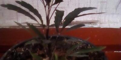 Помогите узнать, как называется это растение?