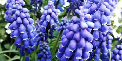 Скажите, пожалуйста, как называется этот цветок?