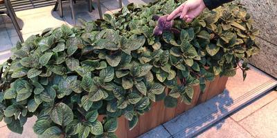 Подскажите название растения и условия его выращивания