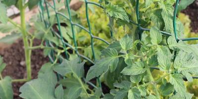 Опоры для томатов своими руками: как быстро подвязать все растения