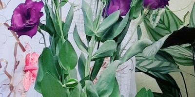Подскажите название этих цветов