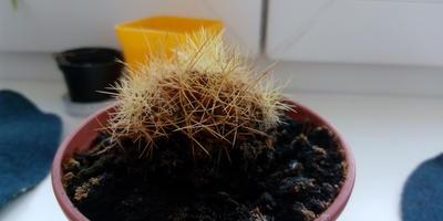 Это кактус уже умер или стоит ещё побороться?