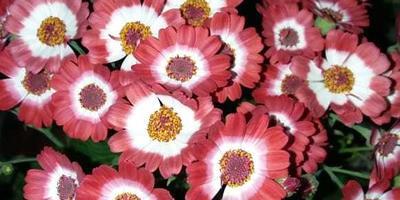 Подскажите, как называется этот цветок!