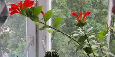 Как называются домашние цветы?