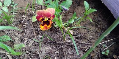 Как называются цветы?