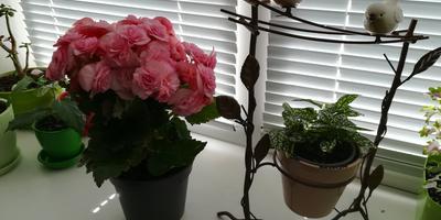 Подскажите, пожалуйста, названия растений