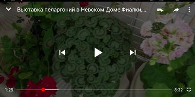 Подскажите сорт пеларгонии