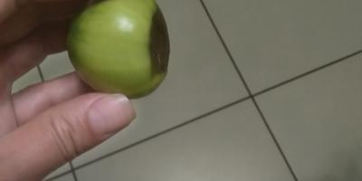 Подскажите, что происходит с помидорами?