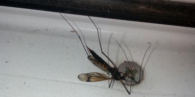 Что за насекомое? Ядовитое ли оно?
