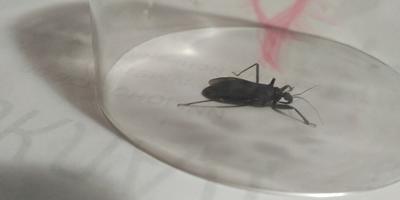Что это за насекомое? Опасное оно или нет?
