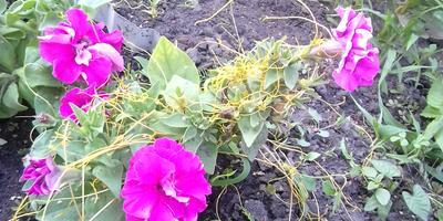 Помогите определить сорняк