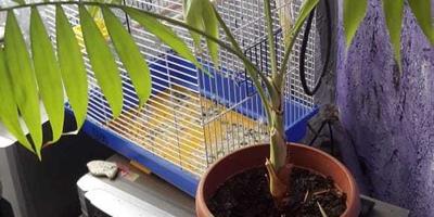 Подскажите, что это за комнатное растение?