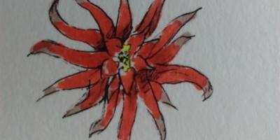 Помогите определить кустовое растение c красными цветами