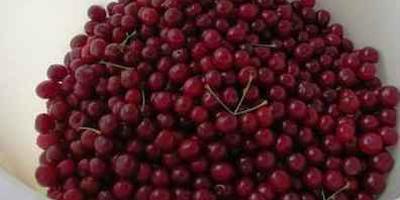 Вишня в собственном соку: лучший рецепт на зиму