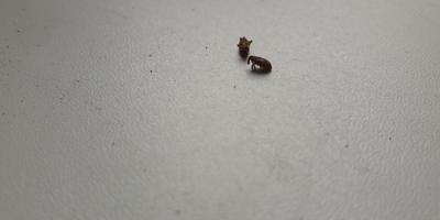 Что это за насекомые?