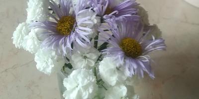 Подскажите, пожалуйста, что за цветок