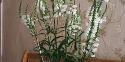 Подскажите, пожалуйста, что это за цветок