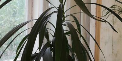 Подскажите, как называется это растение?!