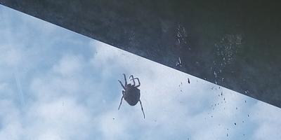 Что за паук? Опасен ли он?