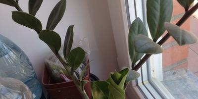 Подскажите названия комнатных растений