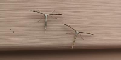 Что это за насекомые? Сидят неподвижно...