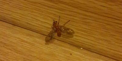 Что за насекомое?