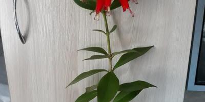 Подскажите, пожалуйста, какой это цветок?