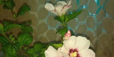 Подскажите, пожалуйста, как называются эти цветы