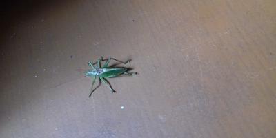 Подскажите, что это за насекомое?