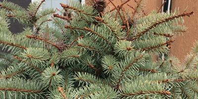 Помогите спасти елку