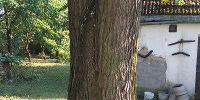 Как вылечить старое дерево?