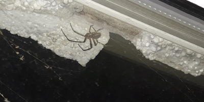 Как называется этот паук?
