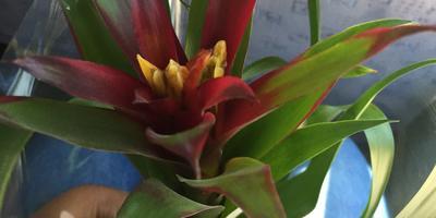 Как называется цветок? Как за ним правильно ухаживать?