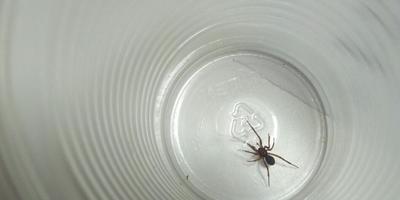 Подскажите, пожалуйста, что это за вид паука?