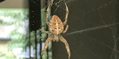 Помогите распознать паука