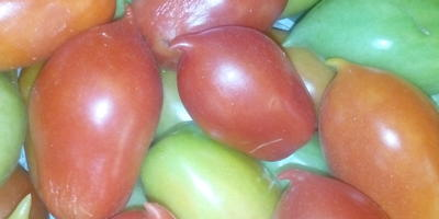 Помогите определить сорт томата
