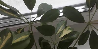 Как называется это растение и как его вырастить?