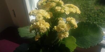 Скажите, пожалуйста, что это за цветок?