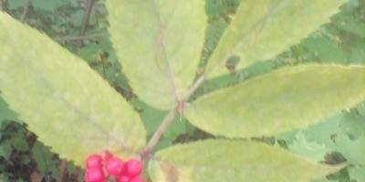 Помогите определить это растение!
