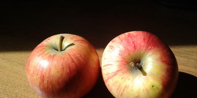 Подскажите, пожалуйста, что за сорт яблони?