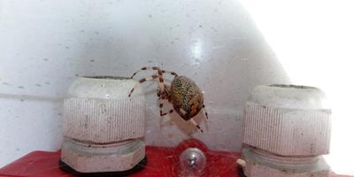Подскажите, что это за паук? Опасен ли он?