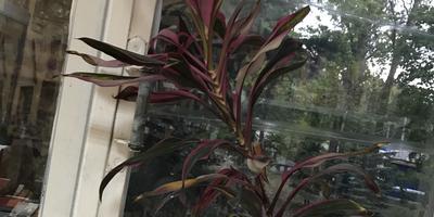 Что это за растение и как за ним ухаживать?