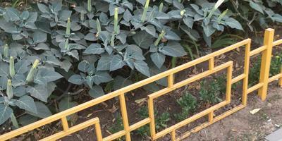 Как называется это растение? Каким способом его лучше размножить?