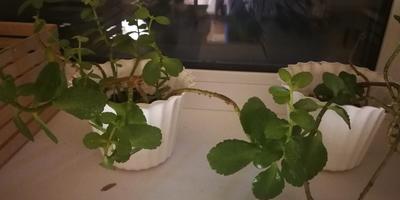 Как называется это растение и как ухаживать за ним?