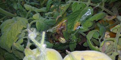 Помогите определить паука