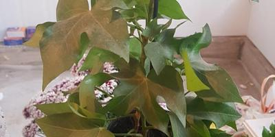 Помогите определить, что это за растение?!