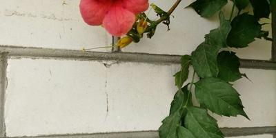 Подскажите, что это за растение и как оно размножается?