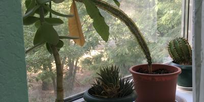 Как называются все эти растения? Как их размножать?