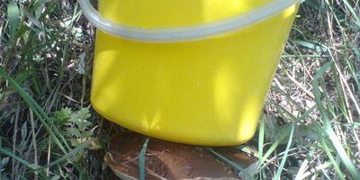Грибы и грибочки в окрестностях Тулы